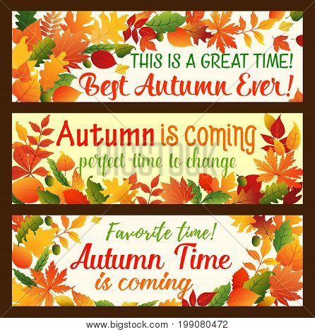 Autumn leaf banner set of fall nature season border. Orange maple tree leaves, acorn branch, yellow and red foliage of chestnut, oak, rowan, elm and birch for Hello Autumn card design