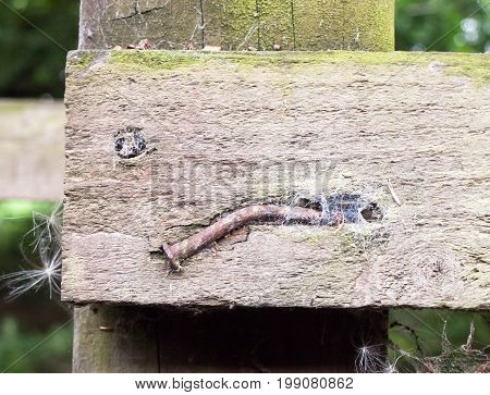 Close Up Of Belt And Old Nail In Wooden Post