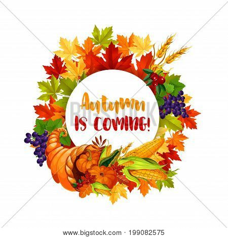 Thanksgiving Day poster of autumn harvest holiday. Leaf of maple tree frame with Thanksgiving cornucopia full of pumpkin and corn vegetable, wheat, grape and cranberry fruit for fall season design
