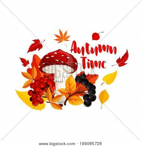 Autumn or fall nature season poster. Orange leaf of maple tree, forest mushroom and berry, yellow foliage of chestnut and birch, rowanberry fruit branch and fly agaric for autumn themes design