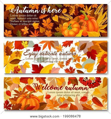 Autumn pumpkin with fallen leaf banner set. Orange maple leaf, pumpkin vegetable, ripe wheat and branch with acorn and rowanberry greeting card for Thanksgiving Day or autumn season harvest design
