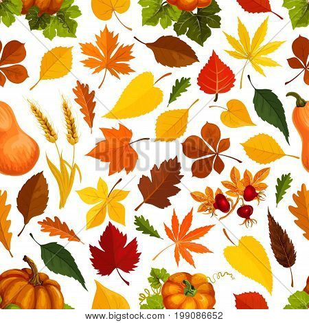 Autumn seamless pattern for September holiday season. Vector oak acorn, maple and poplar and aspen leaf, pumpkin vegetable, dog-rose and rowanberry berries harvest, wheat or rye