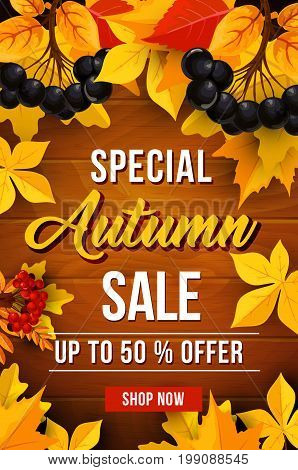 Autumn sale 50 percent off discount poster for September seasonal shopping promo. Vector autumn maple, oak acorn or poplar and aspen tree leaf foliage background with falling leaves and berry harvest