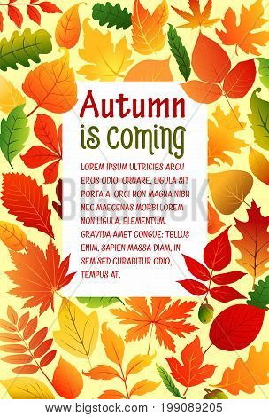 Autumn is coming poster template of foliage and fall leaves for seasonal greeting card design. Vector autumn foliage of maple leaf, oak acorn or rowan and birch, poplar or aspen and elm tree leaves