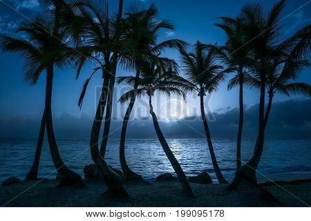 Beautiful full moon reflected on the calm water of a tropical beach with palm trees