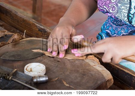 Closeup of hands making cigar from tobacco leaves. Traditional manufacture of cigars. Dominican Republic.