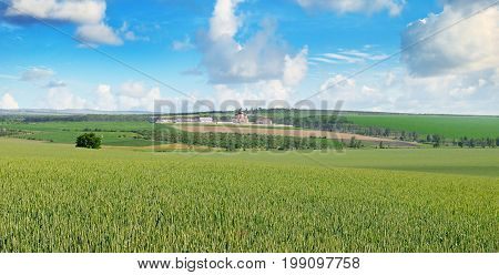 Wheat field and orthodox temple against the blue sky