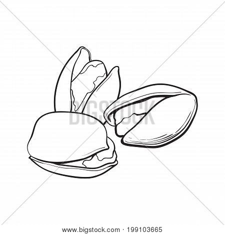 Group of black and white pistachio nuts, shelled and unshelled, sketch style vector illustration isolated on white background. Realistic hand drawing of pistachio nuts