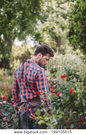 Back View Of Handsome Gardener In Apron Walking In Garden With Various Plants And Flowers