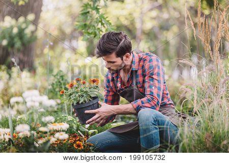 Gardener Holding Flower In Flowerpot While Checking Plants In Garden