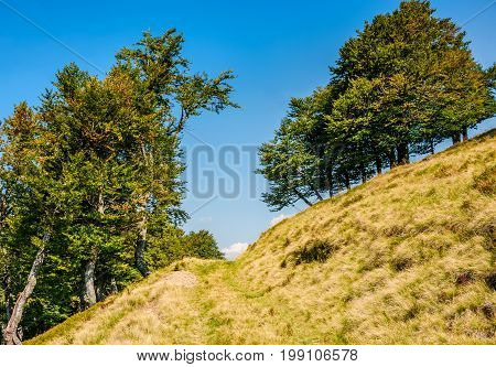 Path Through Beech Forest On A Grassy Hillside