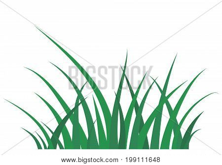 Fragment of a green grass isolated on a white. Vector illustration in flat style
