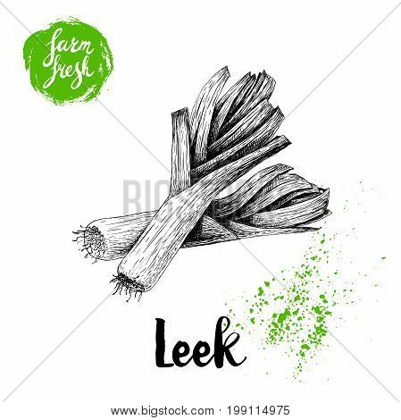 Hand drawn sketch style fresh leek group composition. Isolated on white background. Vector illustration of healthy fresh organic food. Farm fresh market.