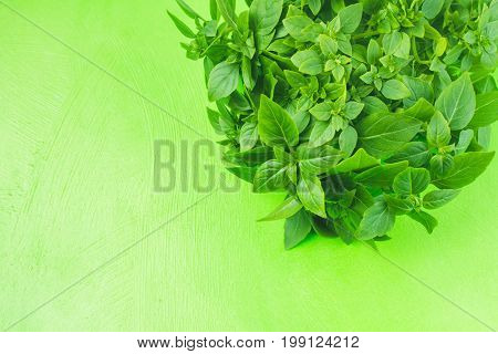 A Bunch Of Green Lemon Basil On A Green Background