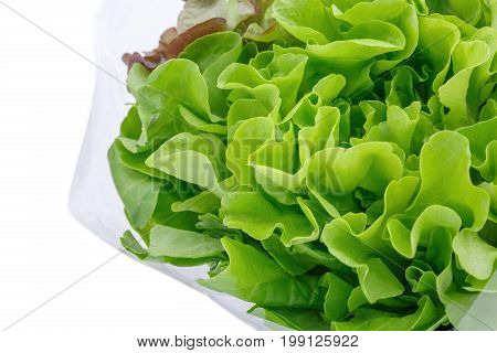 Close-up of a bouquet of green lettuce leaves, isolated on a white background. Organic and fresh salad leaves in a transparent package. Vegetarian, raw and healthy ingredients.