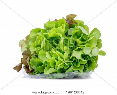 Close-up of a branch of green lettuce leaves, isolated on a white background. Fresh and organic salad leaves in a cellophane. Vegetarian, raw and healthy ingredients for diets.
