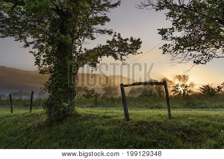 Field and Tree in Fog with Sunbeam at Sunrise