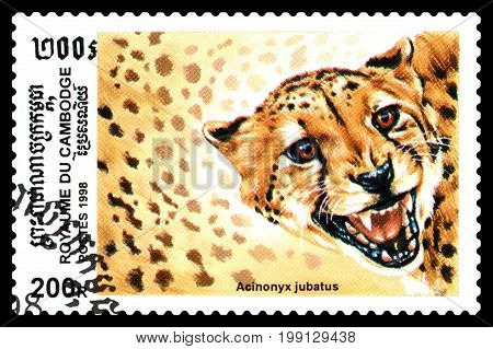 STAVROPOL RUSSIA - August 04 2017 : A Postage Stamp Printed in the Cambodia shows Acinonux sealion (Acinonux jubatus) series circa 1998