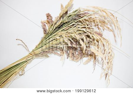 The herbarium of meadow grass is connected with a jute rope.