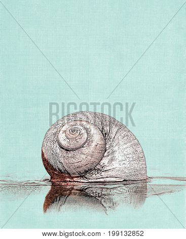 A moon snail seashell on a textured green cloth background.
