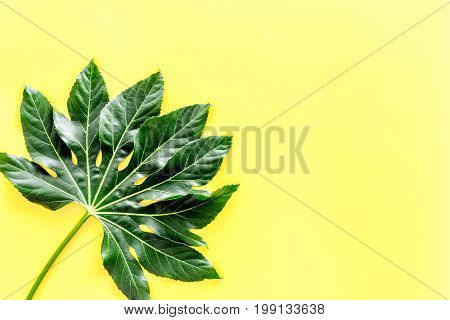 Big leaf of tropical plant on yellow background top view.
