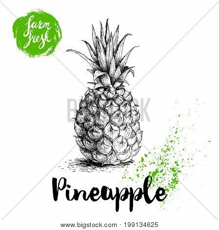 Hand drawn sketch style pineapple poster. Vector pineapple eco food illustration. Hand drawn farm fresh badge.