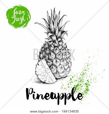 Hand drawn sketch pineapple poster. Vector pineapple with slice eco food illustration. Hand drawn farm fresh badge. Summer symbol.