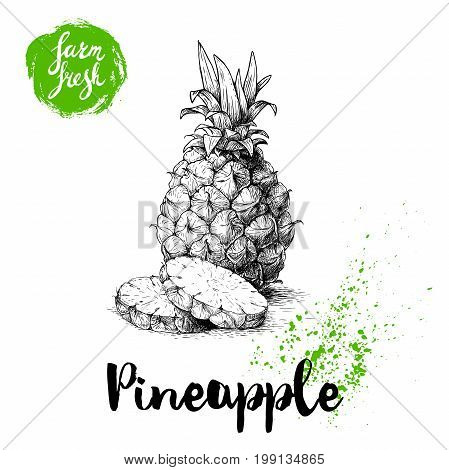 Hand drawn sketch pineapple poster. Vector pineapple with round slices eco food illustration. Hand drawn farm fresh badge.
