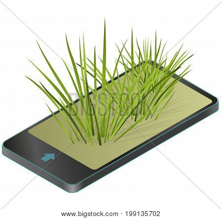 Vector isolated reed in mobile phone. Water plants in communication technologies. Isometric clumps of reeds growing on pool, pond, white background. Rushes flower bamboo reed, green leafs.