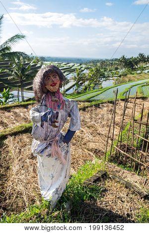 Scarecrow at Jatiluwih Rice Terraces in Bali Indonesia.