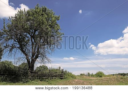 Tree on the outskirts of village in the summer
