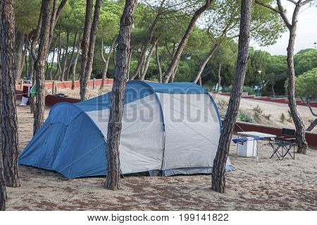 Blue tent on a campground under pine trees