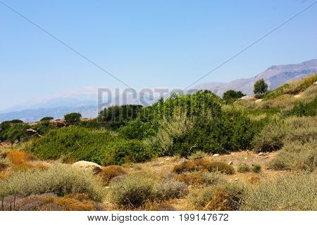 View of the Cretan wild countryside and landscape trees and plants