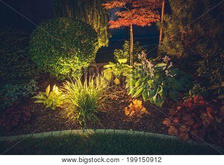 Garden Ambient Lighting. Backyard Garden Illumination System. Colorful Plants at Night. poster