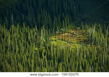 Montana Forest and Lakes Landscape. Glacier National Park. Montana United States.