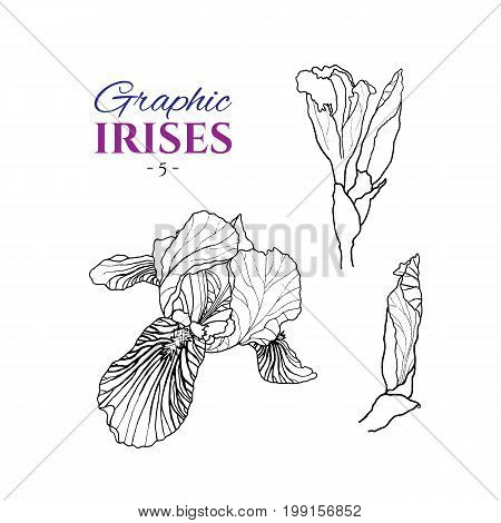 Graphic illustration of irises from different angles, set part 5. Hand drawn flowers and buds in line art style. Beautiful blossoms for romantic design of wedding invitation, advertising, booklets.