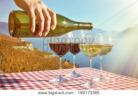 Pouring wine in Lavaux, Switzerland