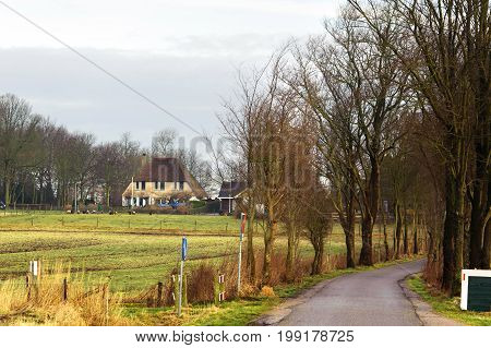 Village road across the field in trees background