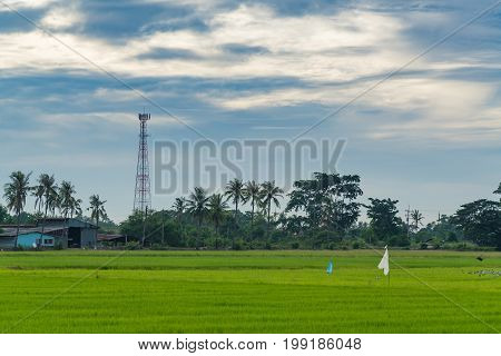 Telecommunication tower with rice paddy field. technology and agriculture concept.