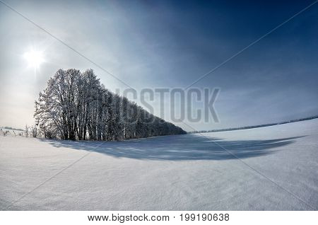 Winter landscape field covered with fluffy white snow. Line of trees covered snow with shadow on snowy field