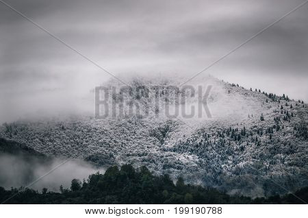 Snowy trees in a fog cloud on the mountain Evergreen Forest in winter Racha Georgia