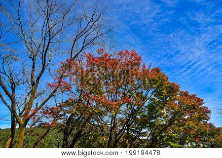 Trees In Forest Under Blue Sky
