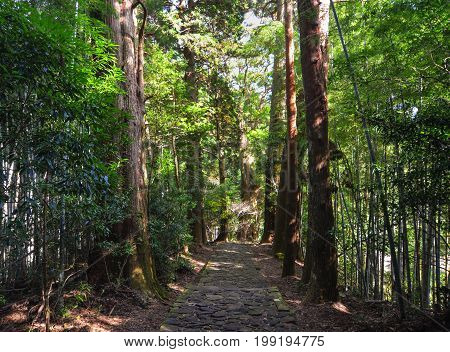 Landscape Of Kumano Kodo In Kansai, Japan