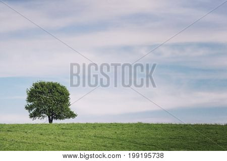 Single tree on meadow in summer landscape under blue sky
