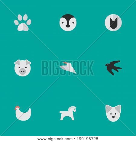 Elements Tomcat, Foot, Steed And Other Synonyms Bird, Swallow And Footprint.  Vector Illustration Set Of Simple Zoo Icons.