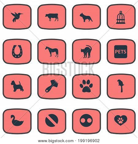 Elements Hummingbird, Wildlife, Drug And Other Synonyms Bird, Banner And Colibri.  Vector Illustration Set Of Simple Zoo Icons.