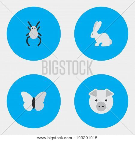 Elements Piggy, Tarantula, Hare And Other Synonyms Moth, Butterfly And Hare.  Vector Illustration Set Of Simple Animals Icons.