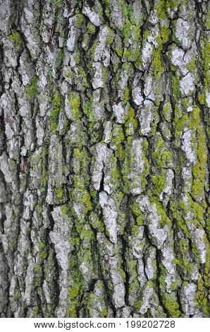 Mossy tree bark texture as a pattern