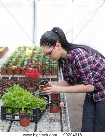 Farmer Woman With Sprouts In Greenhouse