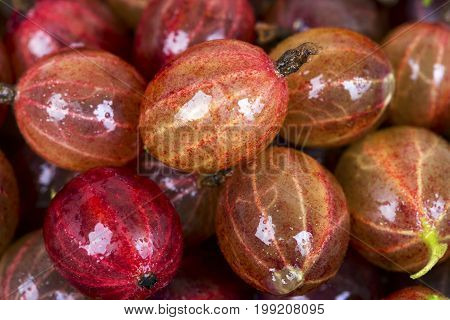 Top view of the red gooseberry fruit. Natural background. Macro shot